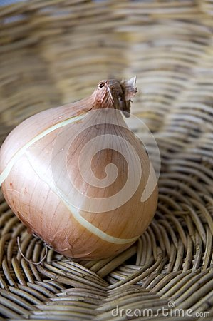 Close up onion