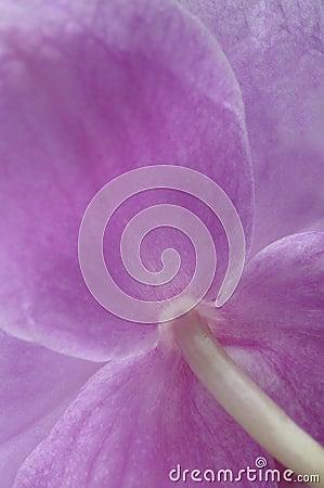Close up of orchid petals