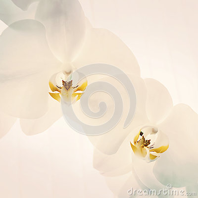 Close-up of orchids on light background.