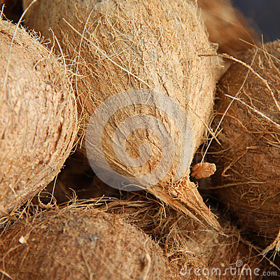 Close up organic coconuts at local market. Shallow depth of field