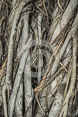 Close-up of parasite tree