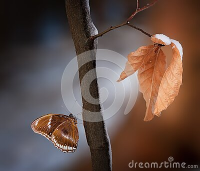 Close Up Photo Of Brown And White Butterfly On Wood Branch Free Public Domain Cc0 Image