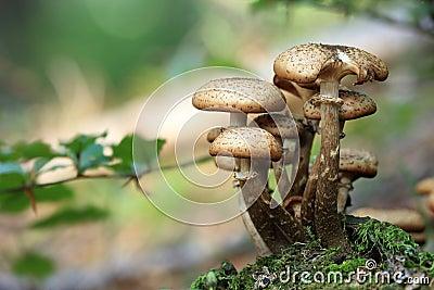 Close Up Photo Of Mushroom During Daytime Free Public Domain Cc0 Image