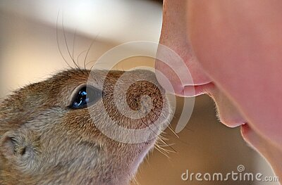 Close Up Photo Of Rodent And Person Free Public Domain Cc0 Image