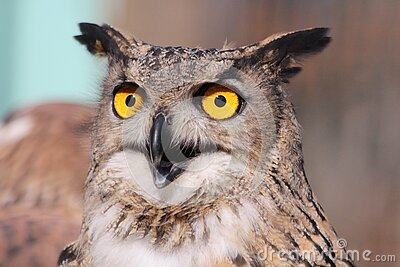 Close Up Photography Of African Owl Free Public Domain Cc0 Image