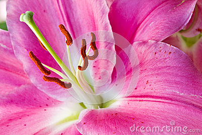 Close up of a pink orchid