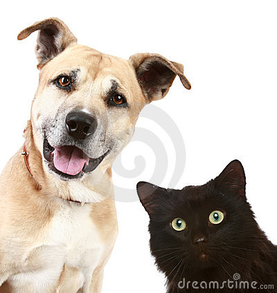 Free Close-up Portrait Of A Cat And Dog Royalty Free Stock Photography - 13557177