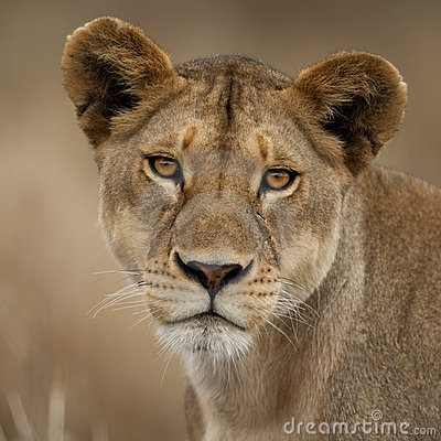 Close-up portrait of Serengeti National Park