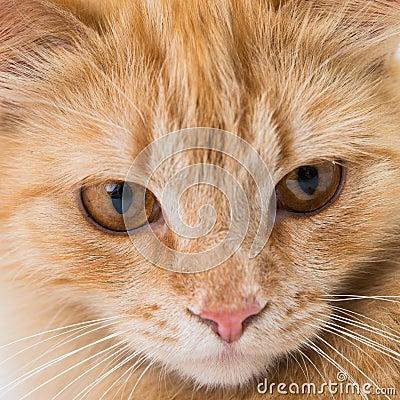 Close up portrait shot of a pet cat