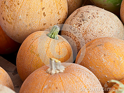 Close-up of pumpkins after harvest