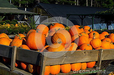 Close up Pumpkins in wagon