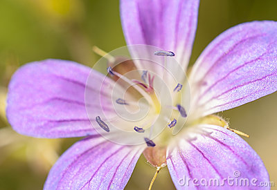 Close up of purple flower