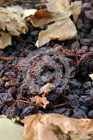 Close-up of Raisins Drying in the Field