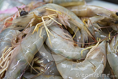 Close up raw shrimp