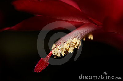 Close up of the red flower
