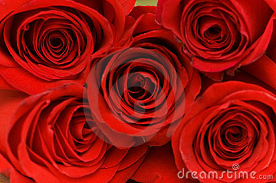 Close up of the  red roses