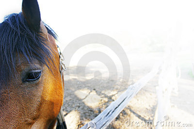 Close up of sad horse in corral