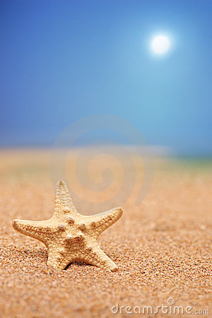 A close up of a sea star on a sandy beach