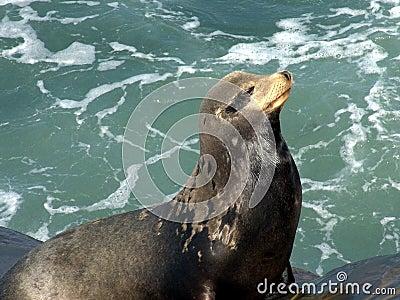 Close up of seal