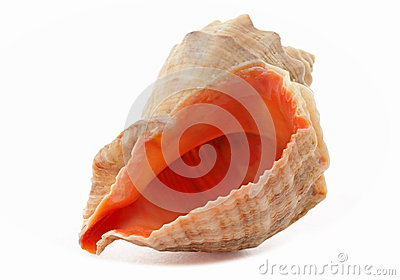 Close up of seashell