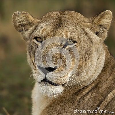 Close-up of Serengeti National Park, Serengeti