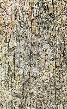 Free Close Up Shot Of Brown Tree Bark  Texture . Royalty Free Stock Photography - 44449177