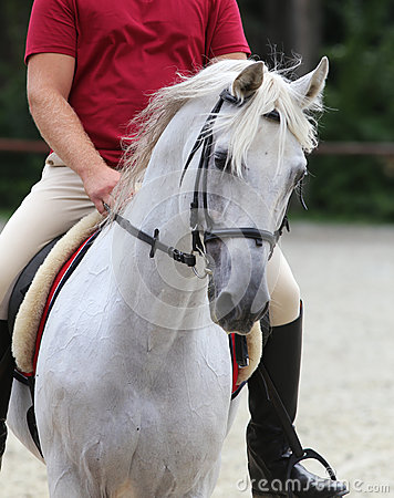 Free Close Up Shot Of Rider On A Her Dressage Horse Stock Photography - 58964312