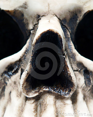 Close up of Skull