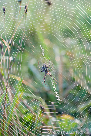 Close-up spider web