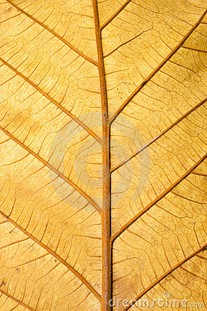 Free Close Up Structure Of Grunge Dry Leaf Texture Stock Photography - 18611252