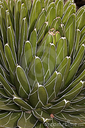 Close up of succulent cactus