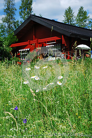Close-up of a summer meadow near the house