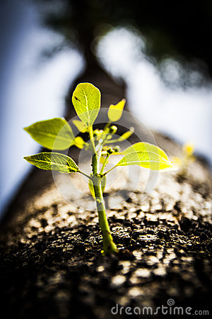 Free Close Up Tree Sprouting New Branch Stock Photography - 52476312