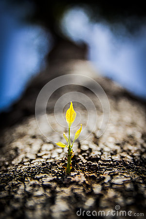Free Close Up Tree Sprouting New Branch Stock Images - 52476544