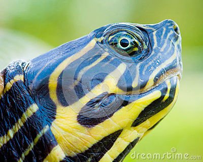 Close up of turtle.