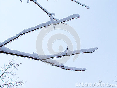 Close-up of twigs covered of ice-Stock photos Stock Photo