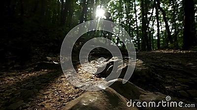 Close-up van de voet in de laars De looppas van een mensenwandelaar langs de weg in de de zomer boswandelaar die in bos bij zonso stock video