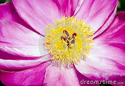 Close-up vermelho da flor