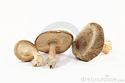 Close-up view of Organic mushrooms Shitake.