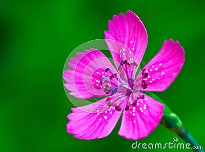 Close up of violet flower
