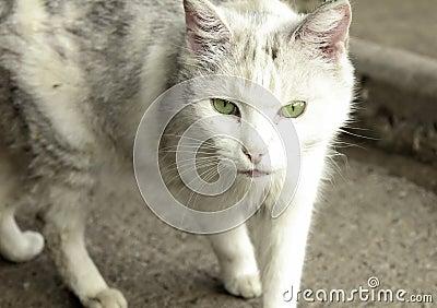 Close up of walking cat