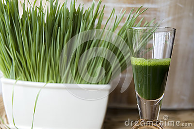 Close up wheatgrass juice shot