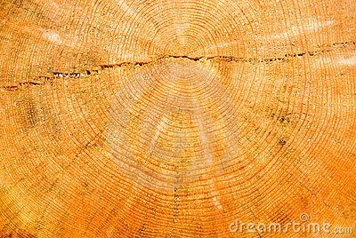 Close-up wooden cut texture.