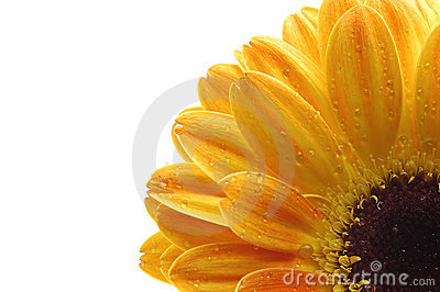 A close up of a yellow flower