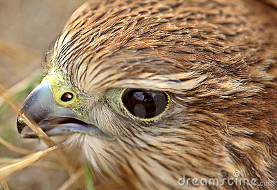 Close up of young Merlin