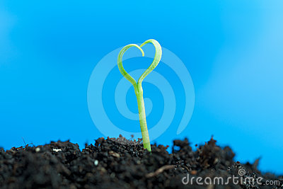Close-up on young seedling growing out of soil