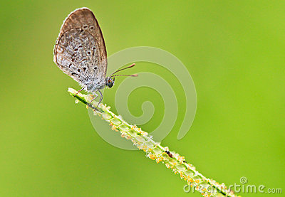 Closed up of butterfly
