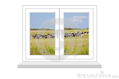 Closed window with a kind on the herd of cows