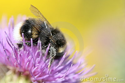 Closeup of bee on flower
