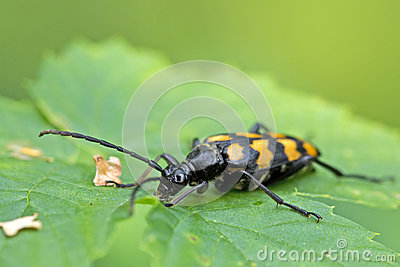 Closeup of a beetle on a leaf
